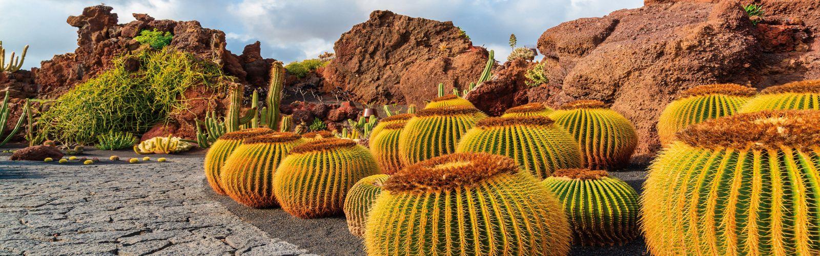 kaktusy pěstování kaktusů